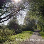 ロンドンの公園の小道©ぱんたれい