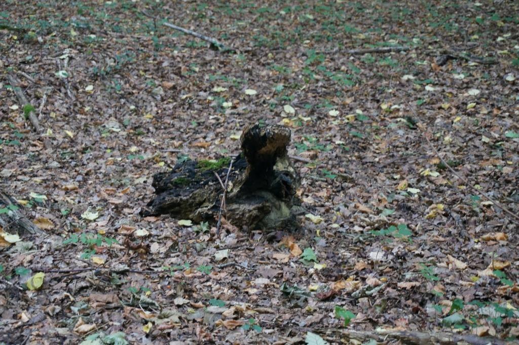 ソワーニュの森 カメ