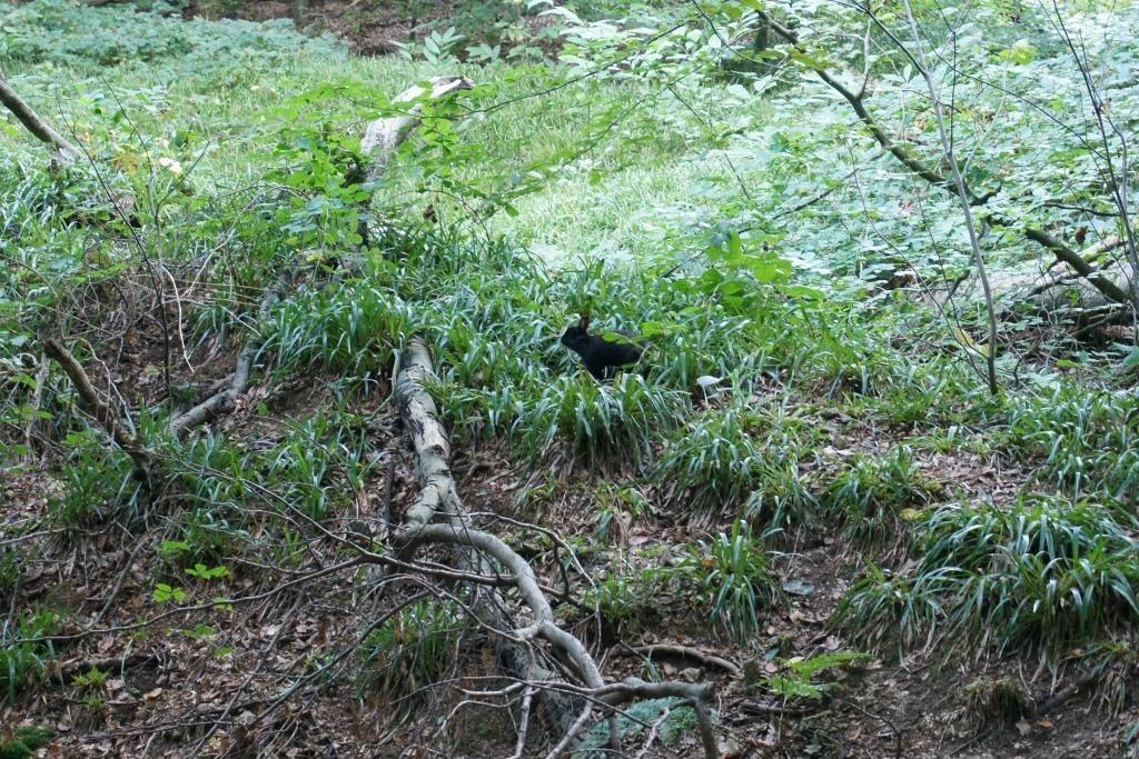 ソワーニュの森 ウサギ
