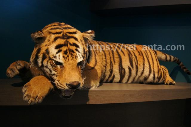 ベルギー自然科学博物館 (13)