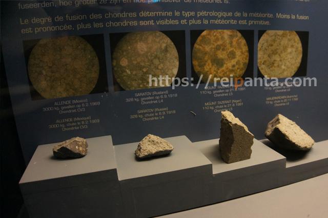 ベルギー自然科学博物館 (14)