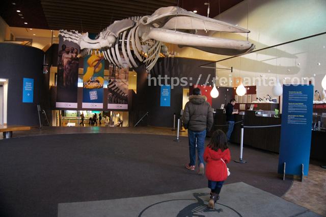 ベルギー自然科学博物館 (3)