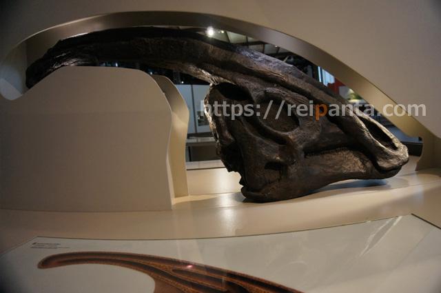 ベルギー自然科学博物館 (6)