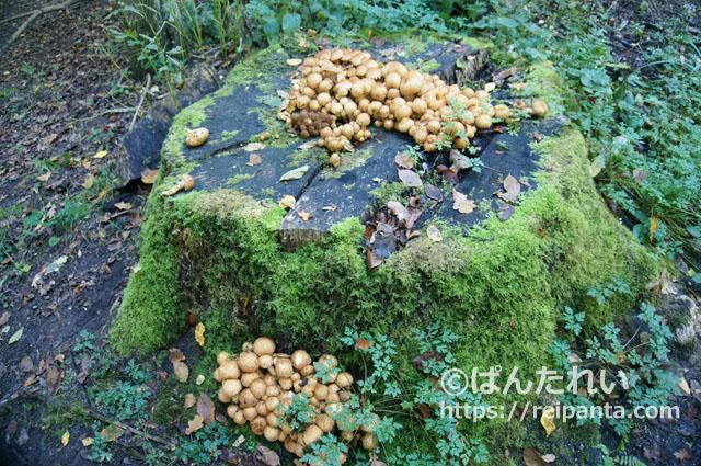 ソワーニュの森17@ぱんたれい