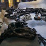 ベルギー自然科学博物館 (11)