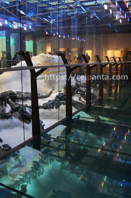 ベルギー自然科学博物館 (12)