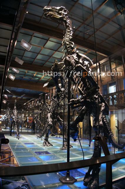 ベルギー自然科学博物館 (4)