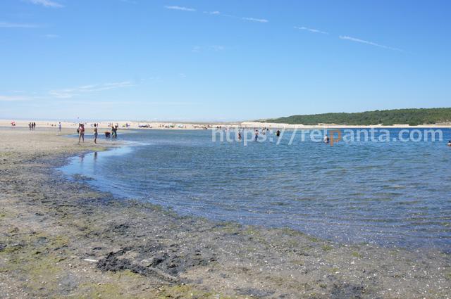ポルトガルの潮干狩り1